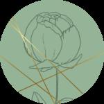 FC_Floral6